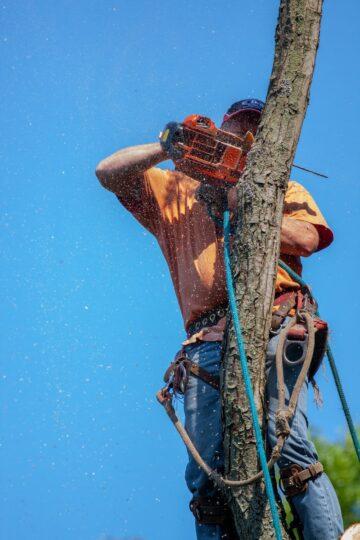man in orange and black helmet riding on brown tree branch under blue sky during daytime